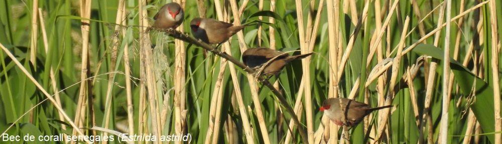 Els ocells de la vall del Ridaura
